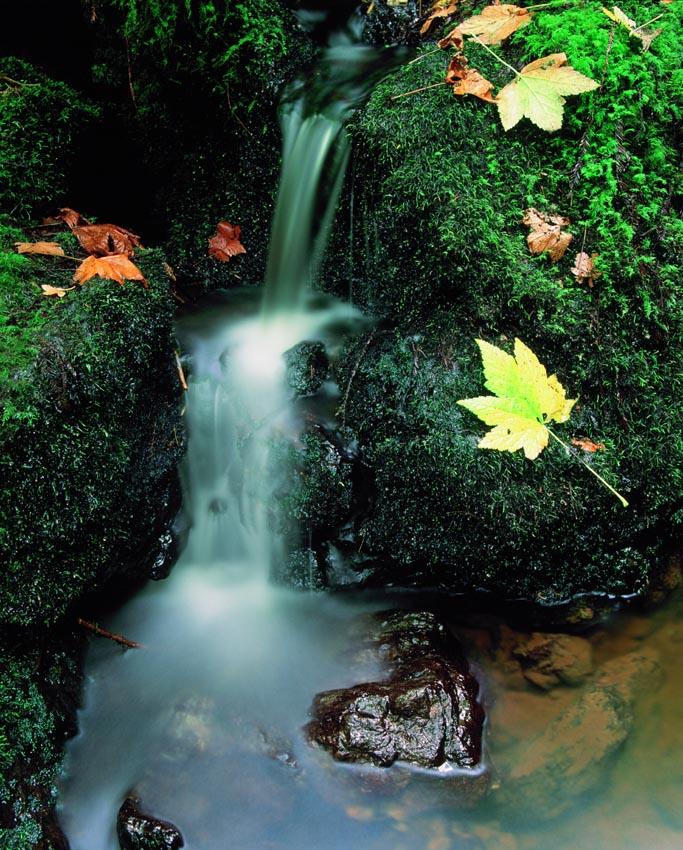Trillium Falls, Detail