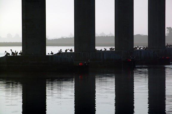 Samoa Bridge Pelicans